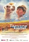 Taevane kaamel