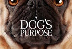EventGalleryImage_dogs_purpose_ver2.jpg