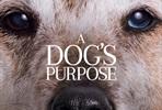 EventGalleryImage_dogs_purpose_ver5.jpg
