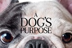 EventGalleryImage_dogs_purpose_ver6.jpg