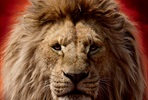 EventGalleryImage_Lion_King_Markus_1350x2000px_Mufasa.jpg