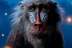 EventGalleryImage_Lion_King_Markus_1350x2000px_Rafiki.jpg