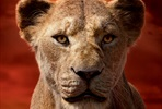 EventGalleryImage_Lion_King_Markus_1350x2000px_Sarabi.jpg