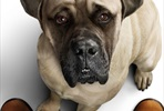 EventGalleryImage_DogsJourney_B1_EE_BigDog_Preview.jpg