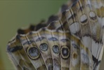 EventGalleryImage_666 SLButterflies_10_Kopie.jpg