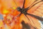 EventGalleryImage_666 SLButterflies_13_Kopie.jpg