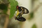 EventGalleryImage_666 SLButterflies_17_Kopie.jpg
