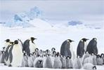 EventGalleryImage_PingviinienMatka2_1.jpg