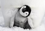 EventGalleryImage_PingviinienMatka2_2.jpg