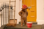 EventGalleryImage_Paddington2_3_SavonKinot.jpg