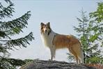 EventGalleryImage_Lassie palaa kotiin 1.jpg