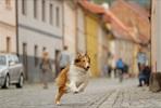 EventGalleryImage_Lassie palaa kotiin 3.jpg